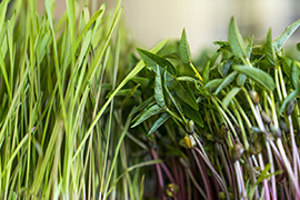 Домашняя микрозелень в микроферме Rawmid Dream Sprouter