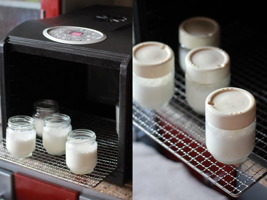 Йогурт в дегидраторе - как приготовить йогурт в домашних условиях